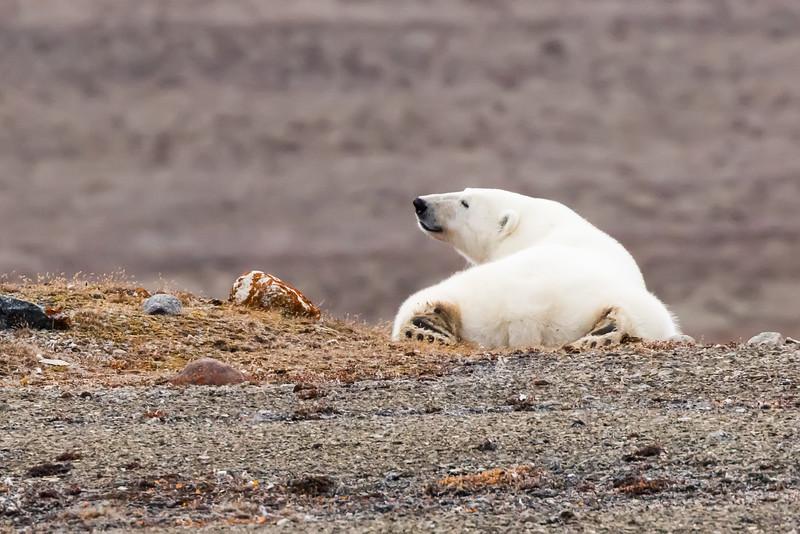 Polar bear keeping an eye on us.