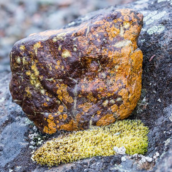 Fauna, rocks, and lichen