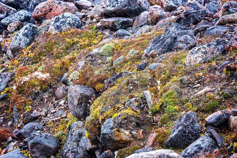 Fauna, rocks, and lichen at Barrow Falls.
