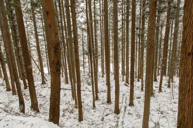 When initially coming to the park we hiked a 1.5 mile trail through this beautiful forest to reach the lodge.
