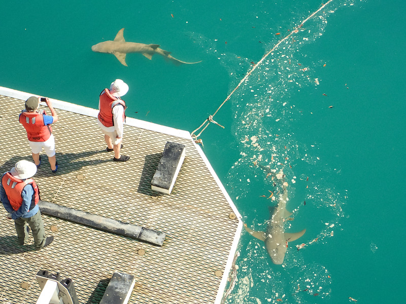 On our last couple of days we attracted some sharks who liked to hang out at the back of the ship.