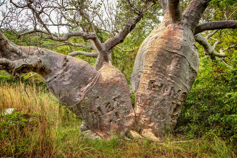 This historic boab tree was inscribed by the crew of the Mermaid in 1820.