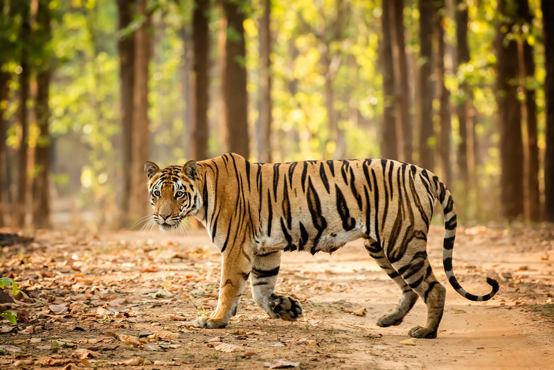 This is my favorite photo of our search for tigers.