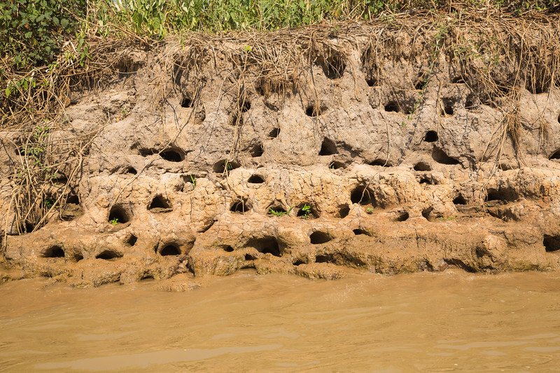 What are all these holes along the river bank, we asked? During the wet season when the water rises above these banks, catfish make nests by boring these holes.