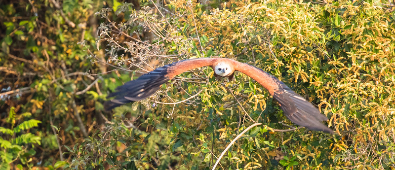 Here is one flying toward me.