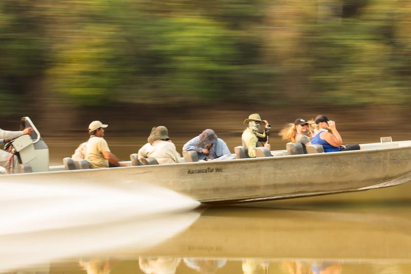Jaguar alert: our companion boat races to where a jaguar was spottted.