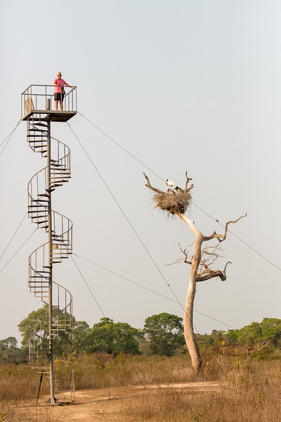 The lodge owners built this spiral staircase near the nest so that we could photograph into the nest. Yes, that's Julie bravely overcoming her fear of heights to bring you some exciting videos. (See her separate page in this gallery.)