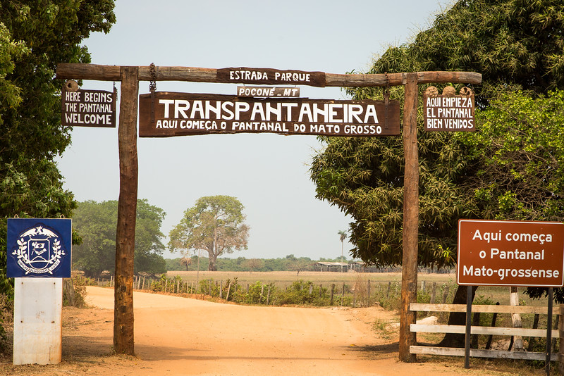 We traveled into the Pantanal, a vast wetlands region, on the Transpantaheira Road.