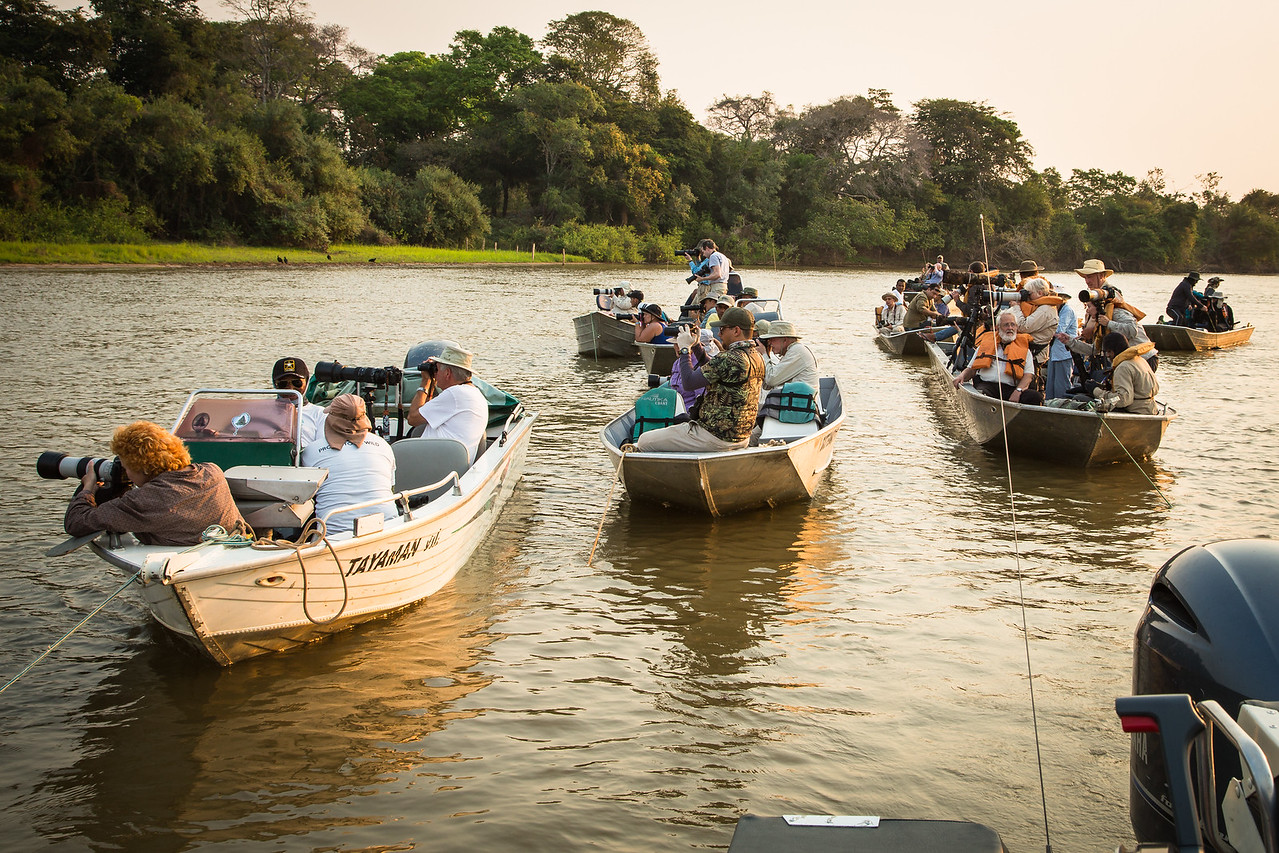 I was surprised how many other boats full of photographers showed up once a jaguar was spotted.