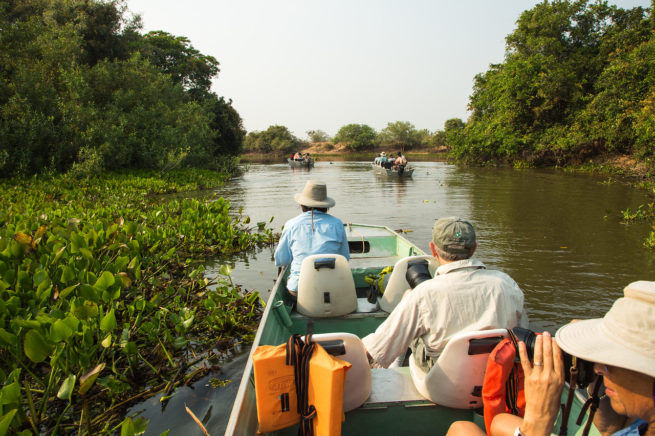 The next morning we were searching the river banks for more jaguars and birds (see the Birds of the Pantanal gallery).