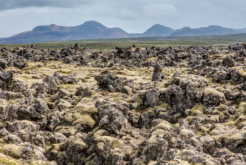 Lava field covered with moss