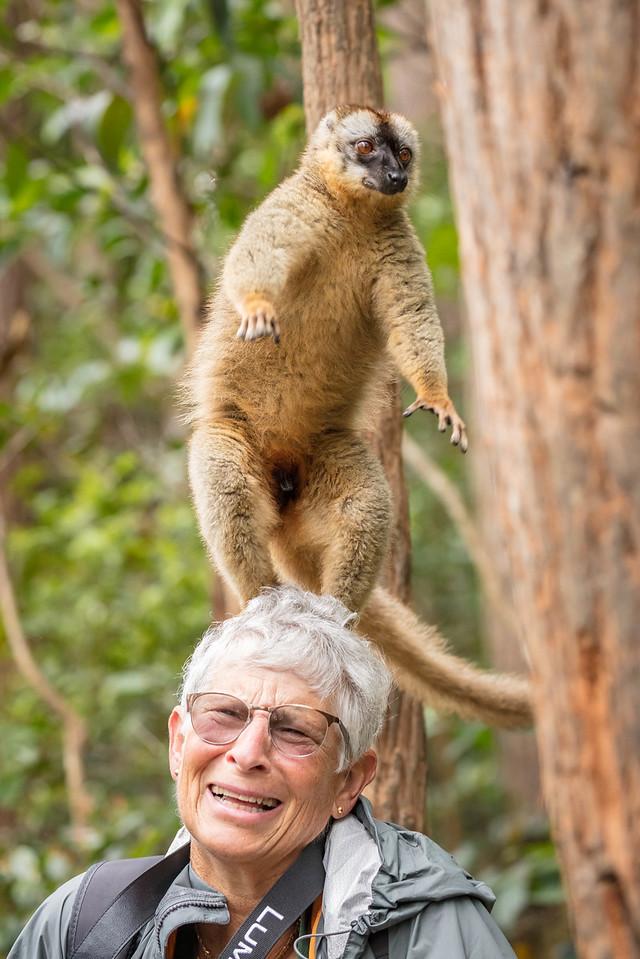 Julie surprised by this lemur balancing on her head
