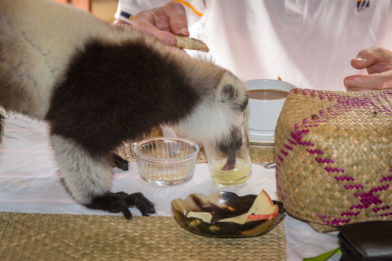 Sometimes the lemurs got a little too friendly when we were having breakfast