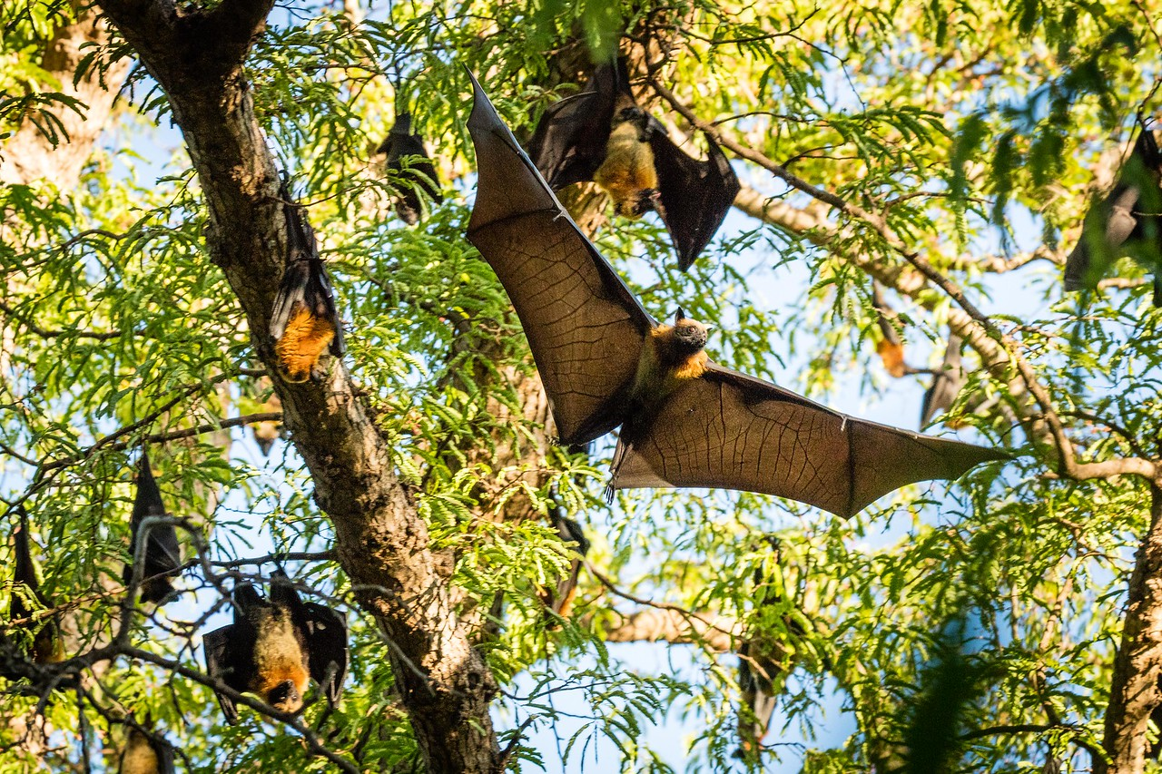 We were given special access to view these bats. The colony we visited had been at this site for many years.