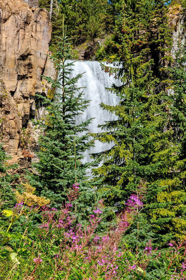 Tumalo Falls through the trees and fireweed