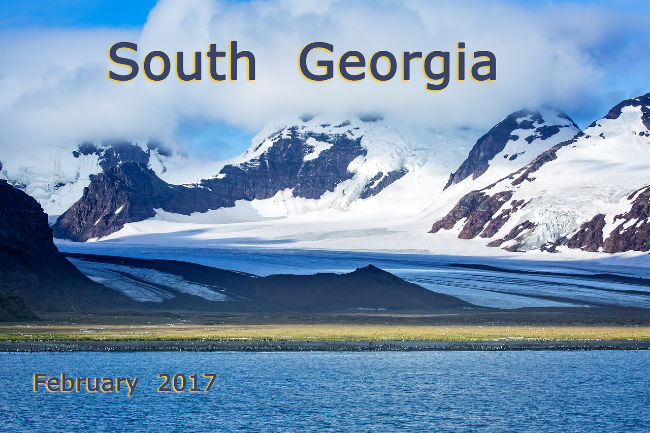 We had been wanting to return to South Georgia ever since we were here briefly in 2011. This photo is of Salisbury Plain taken from our ship with the Grace and Lucas Glaciers in the background. The white dots on the beach are King Penguins.