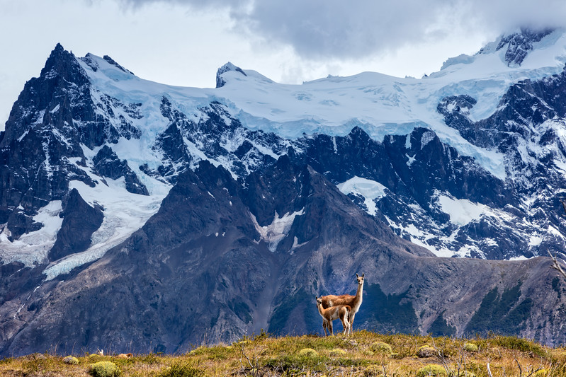 We say goodbye to Torres del Paine with the Paine Massif as a back drop to our guanaco friends.