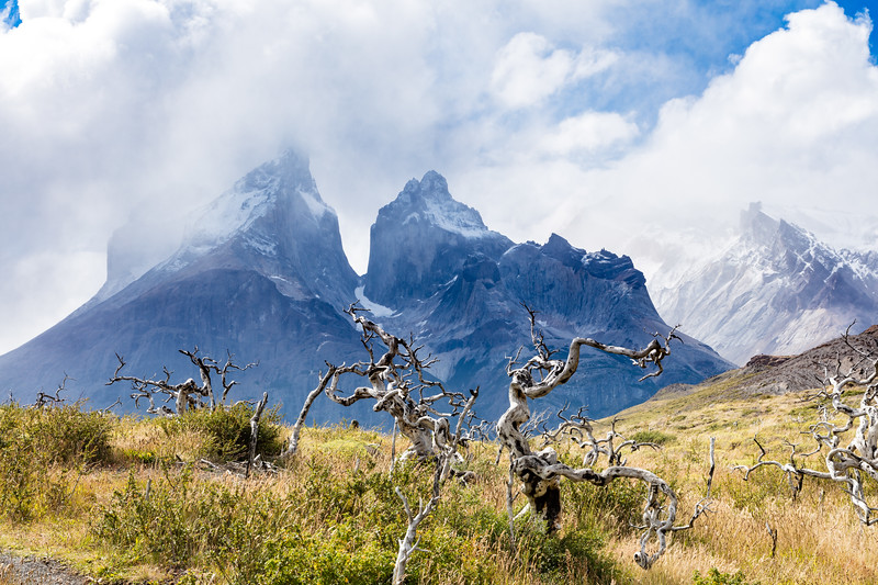 One day we made our way to Salto Grande, the beautiful waterfall and rapids in the park. As we hiked in we had a glimpse of Cuernos del Paine, part of the Paine Massif.