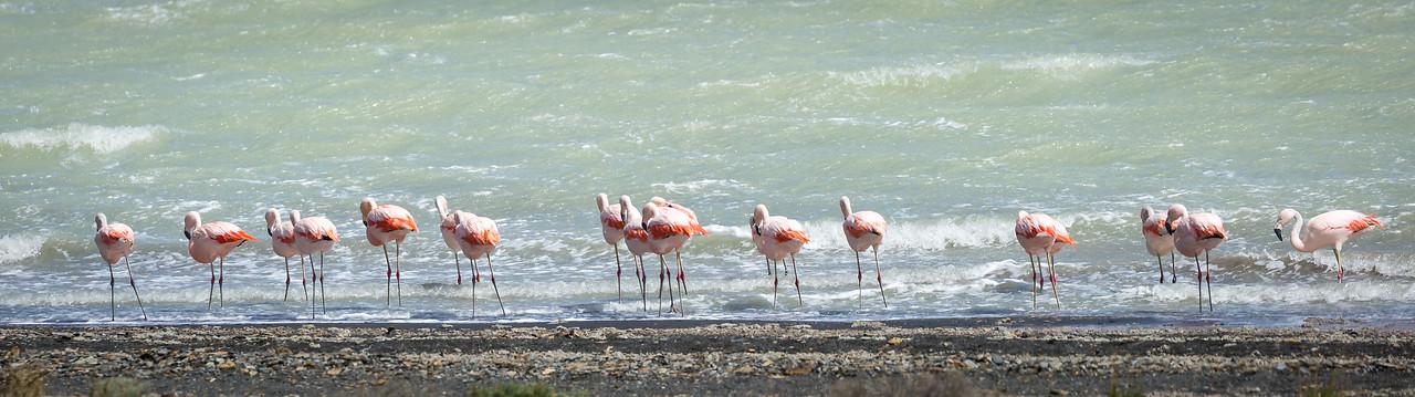 Flamingos on Lake  Amargo.