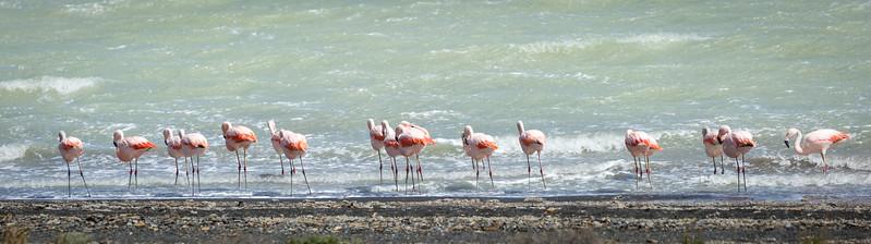 Flamingos on Laguna Amargo.