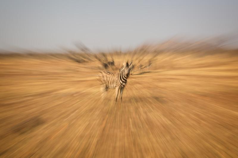 An explosive zebra
