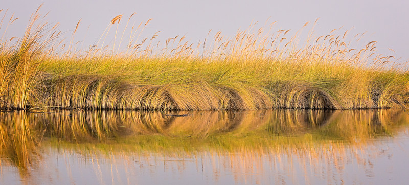 Beautiful grass in the Okavanga Delta