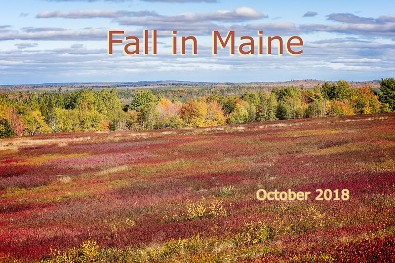 Blueberry field in downeast Maine