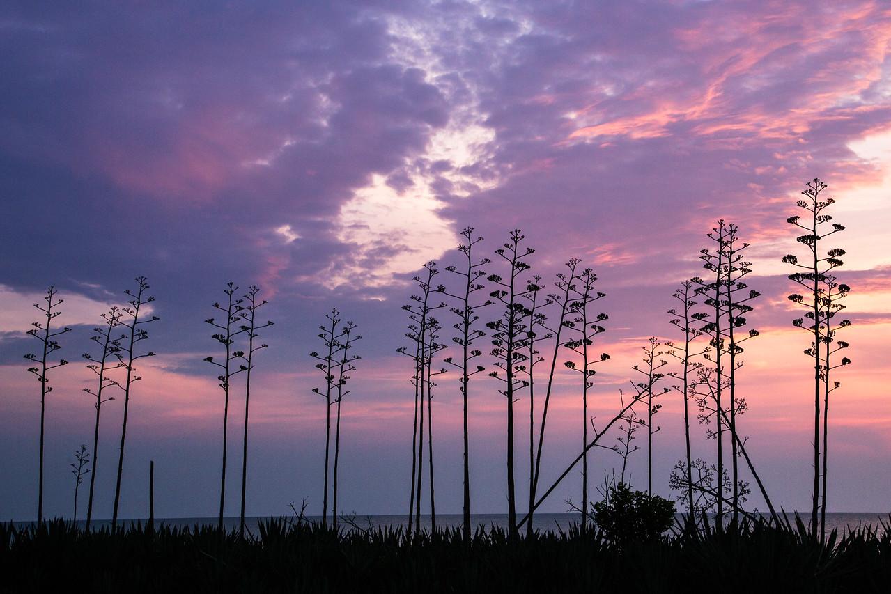 Sunrise through the beachside stalks