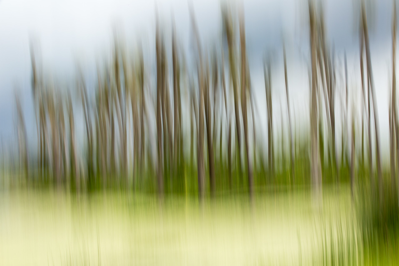 Abstract grove of palms