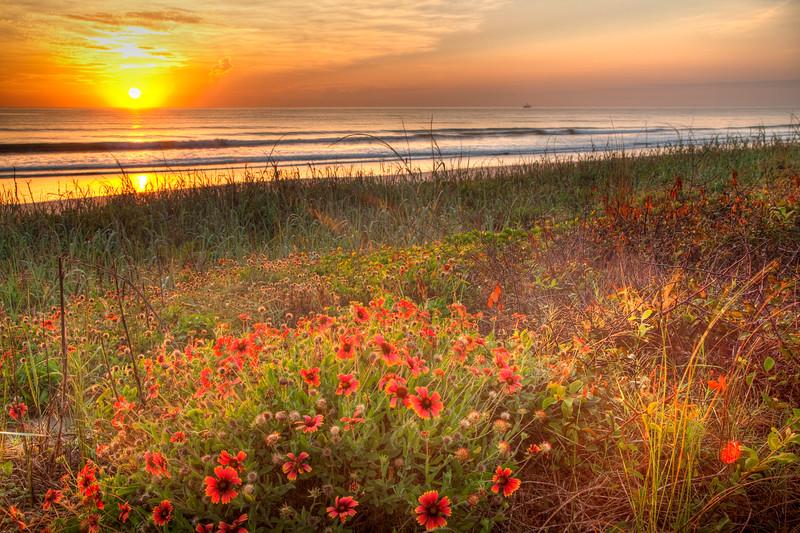 Sunrise in Ormond