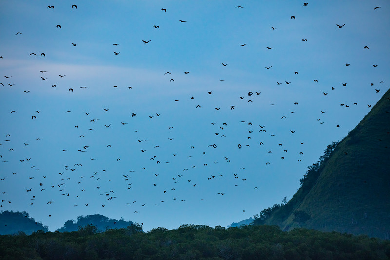 The bats flew solid for at least 20 minutes.