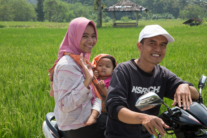 A family on their motor scooter passing through the rice fields.