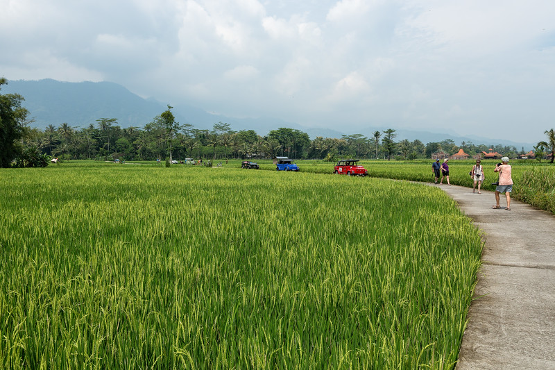 We toured the countryside in 6 VW convertibles. Here we passed through another rice field and got out to stretch our legs.