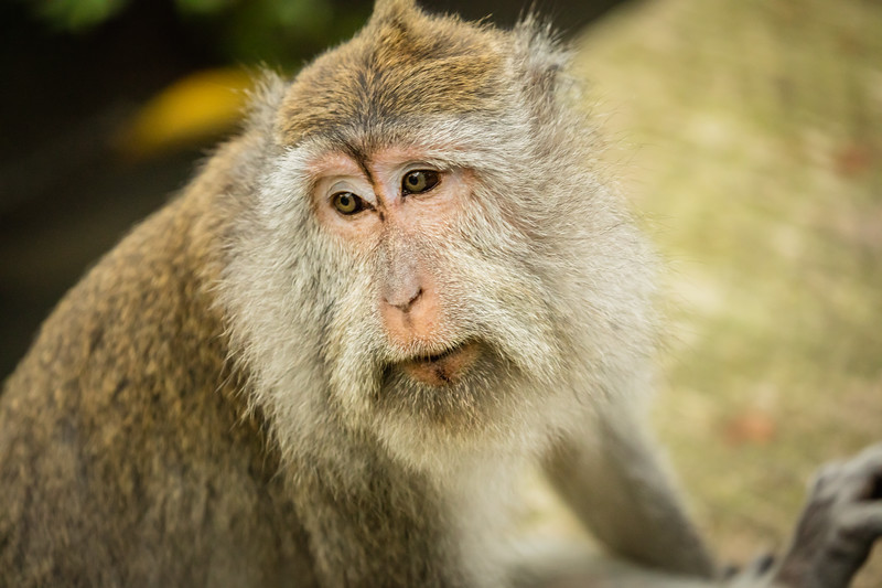 Outside of Bali we visited the Sacred Monkey Forest where we photographed long-tailed monkeys with their young.