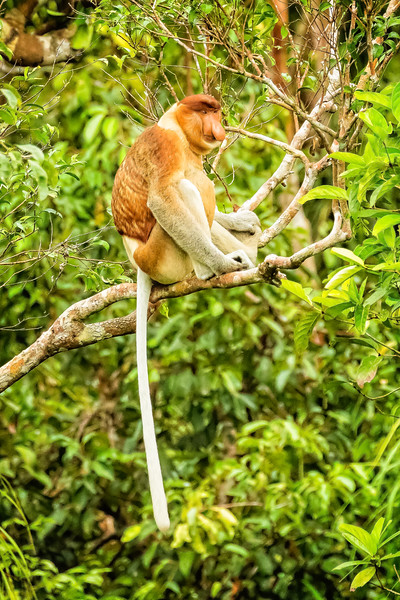 As we traveled up the Sekonyer River we began seeing these unusual looking monkeys.