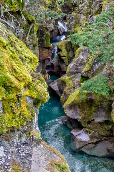 Avalanche Creek slithering through the rocks.