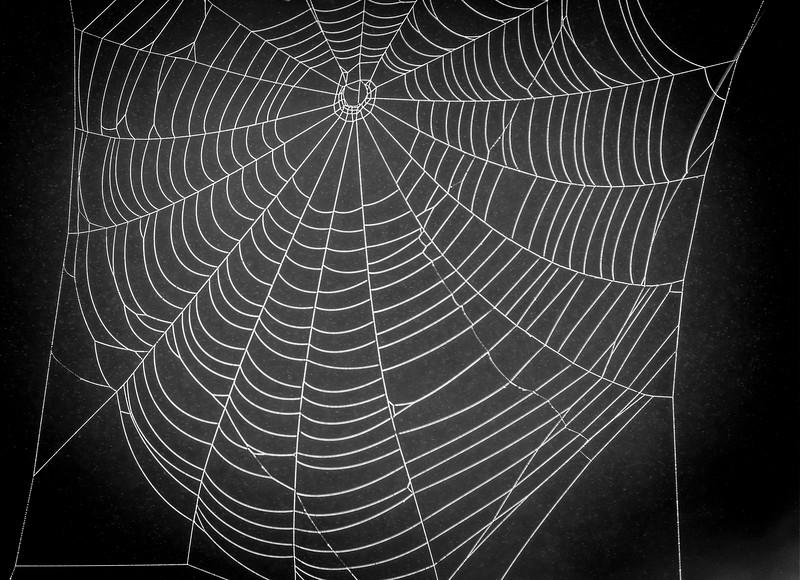 A spider's construction alongside a stream.