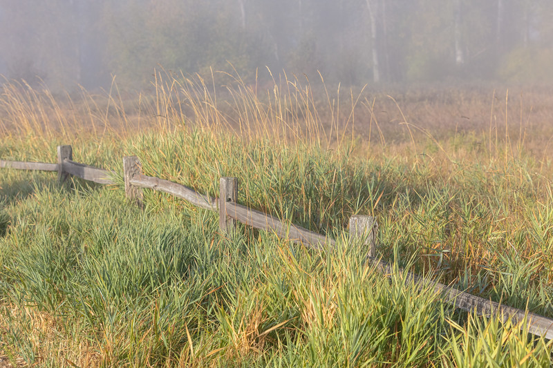 On an early morning walk with the fog beginning to burn off.