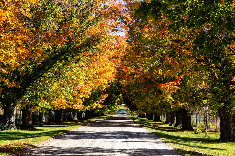 We went leaf peeping at the Daly House in Hamilton, Montana.