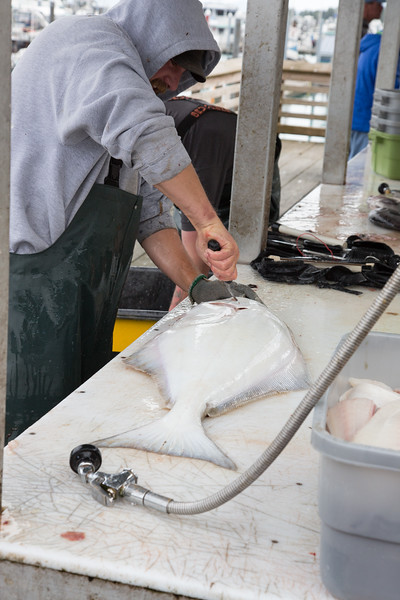 After being filleted the fish are quickly frozen and sent home with the fisherman