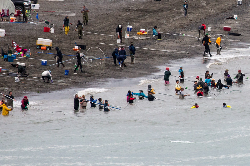 These people are catching salmon using dip nets that are  5 ft in diameter. They are  standing at the mouth of the Kenai River. If you like to get banged with poles, this looks like fun.