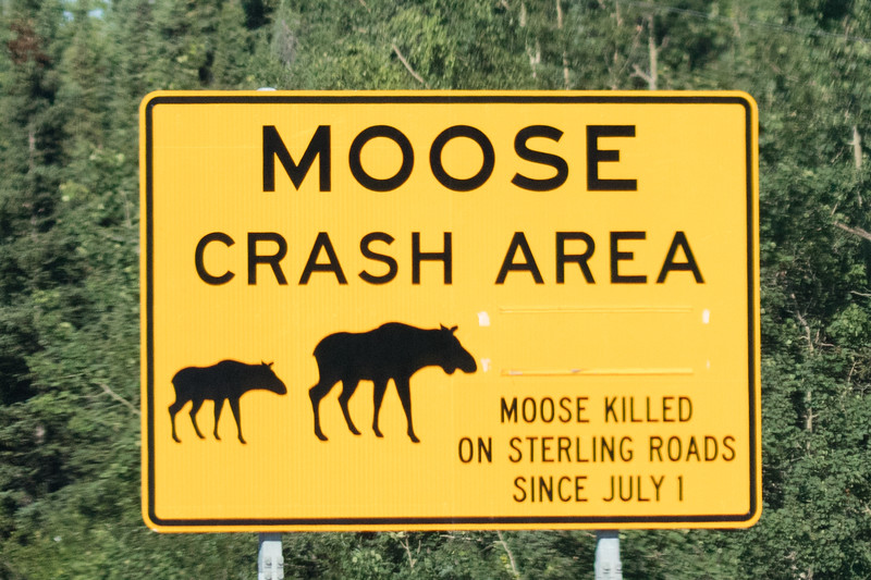 Unfortunately there are a good number of accidents between moose and cars