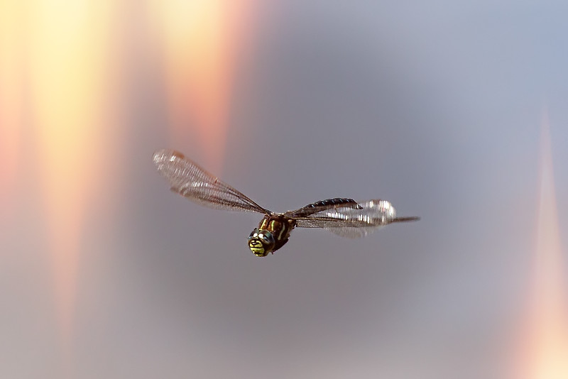 One afternoon we couldn't find bears to photograph so my only catch was a dragonfly