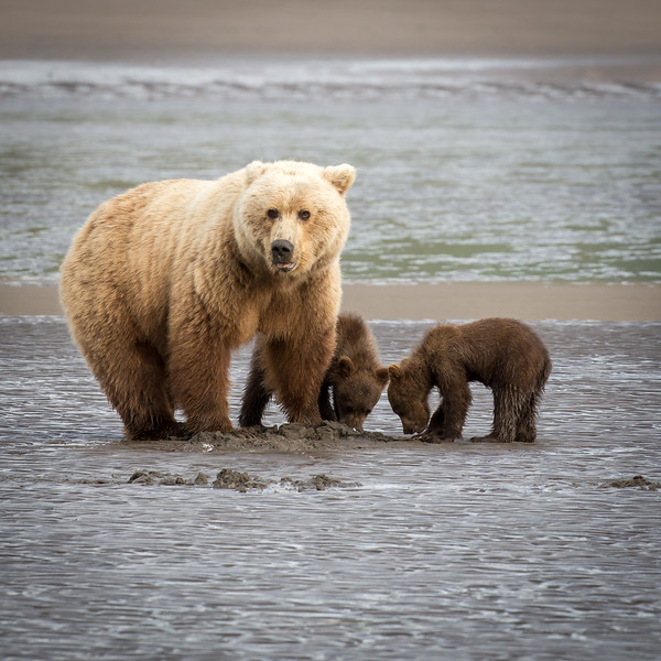 This pair of cubs are about six months old