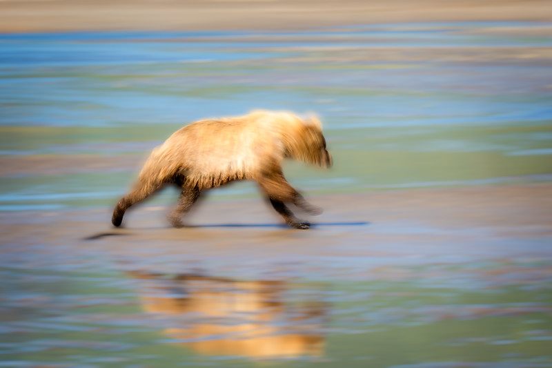 Sometimes they ran so fast the bears were only a blur