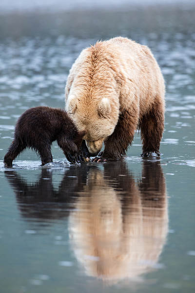 Momma digs and sometimes shares with the cubs