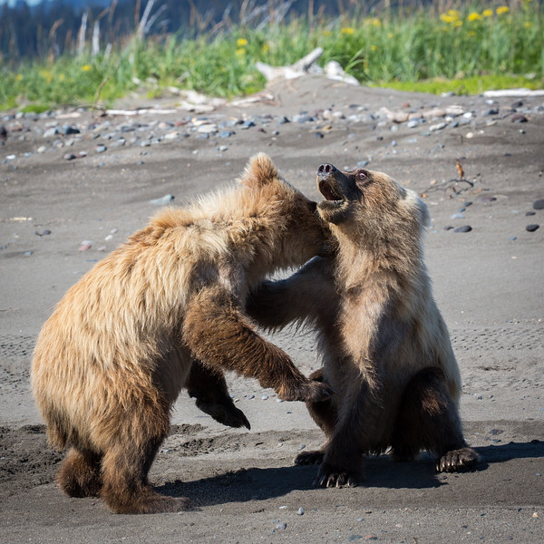 The cubs are about 18 months old