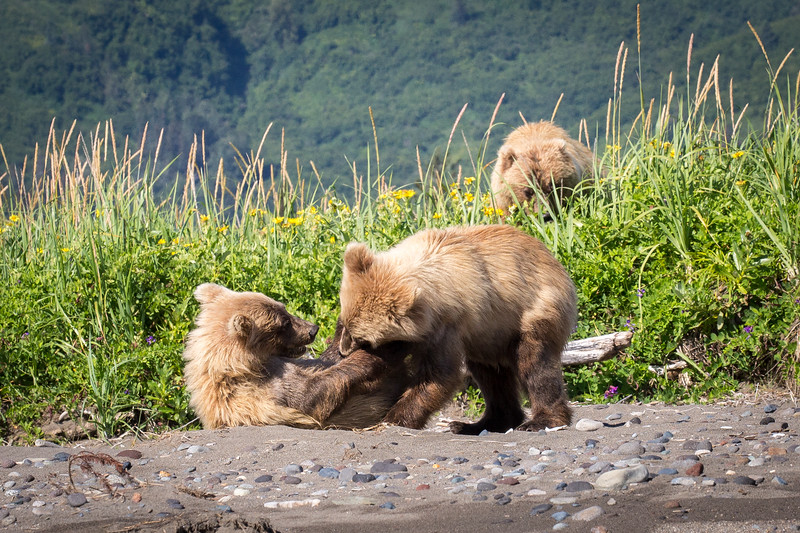 Here are her two very playful cubs