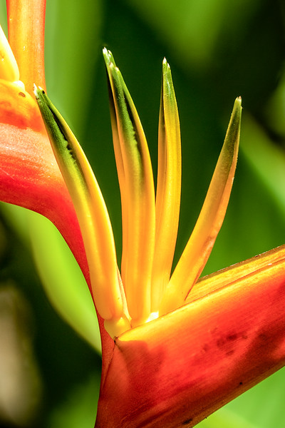Bird of paradise close up