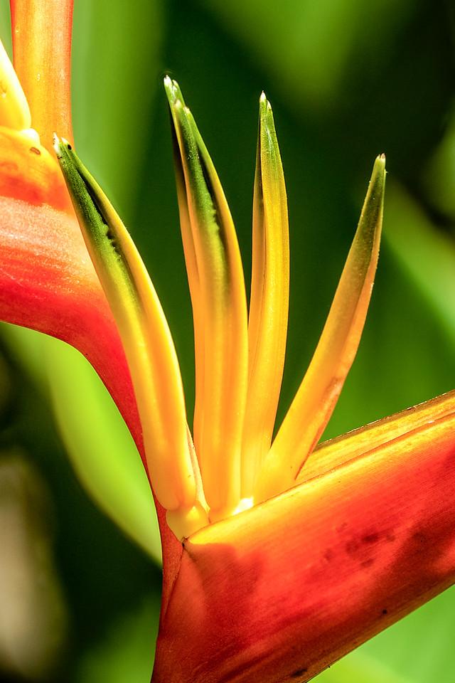 Bird of paradise close up